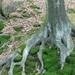 korene v teplúčku