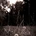 leňošenie v tráve