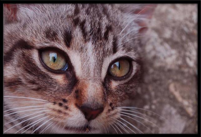 451e5d163 Mačacie oči - Fotografia - Fotogaléria | ePhoto.sk - foto ...
