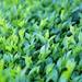 zeleny plot