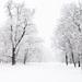Keď bol v Bratislave sneh.