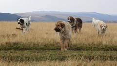 Romania expedícia 2015