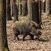 Jarná prechádzka lesom :)