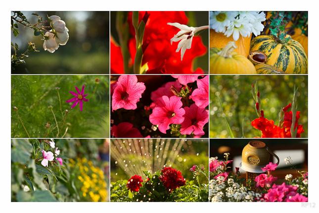 zahradnicka
