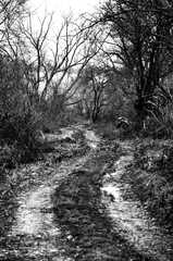 cesta do neznama