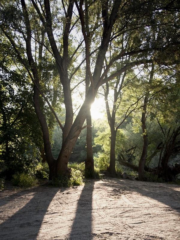 ranné slnko vchádza do lesa