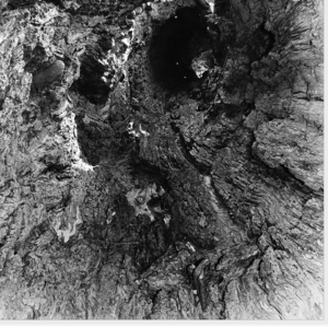 ... hollow tree ...