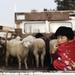 KYRGYZSTAN 2010 - dobytčí trh
