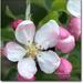 jarny kvet 3