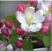 jarny kvet 2