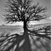 v tieni stromu