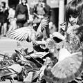 milovníčka holubov II.