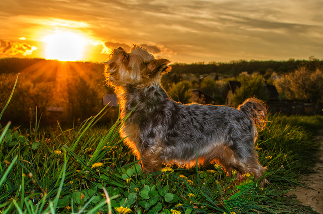 Posledné lúče slnka