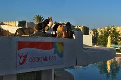 kedy už konečne donesú Cocktail