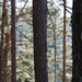 Les so znackou