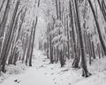 Zimušný les