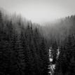 Lesy naše tajomné..