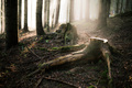 Magický les III