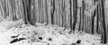 Nostalgický les