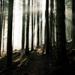 Magický les II