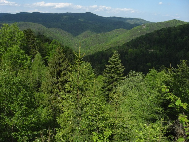 naše lesy