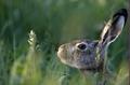 Skrytý v tráve