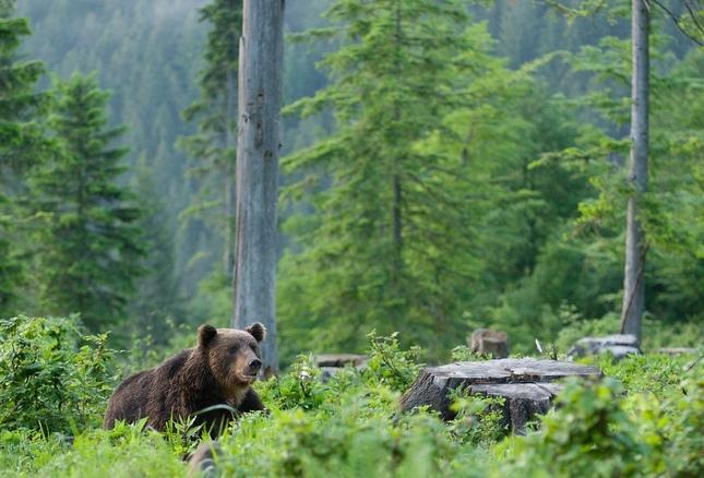 Medvedia pohoda