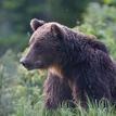 Medvedie úvahy