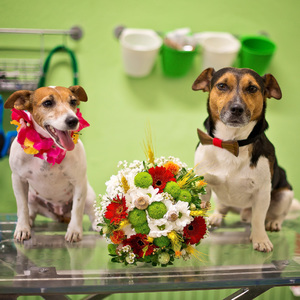 Svadobčania pripravení