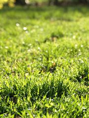 Svieža ranná tráva jarná
