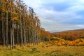 Na okraji lesa