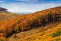 Zlatisté lesy