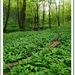 májový les