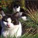 Mačaci život