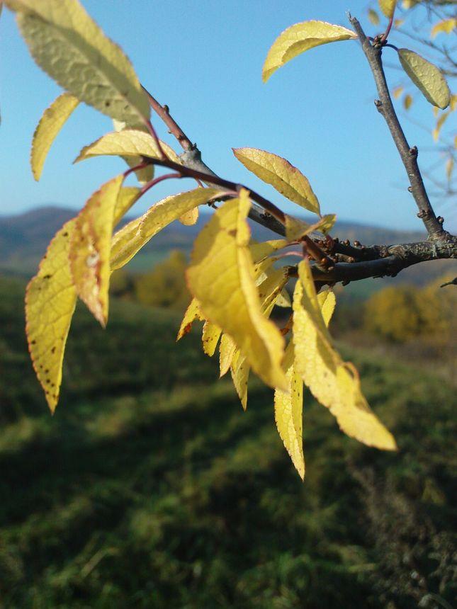 jeseň-2