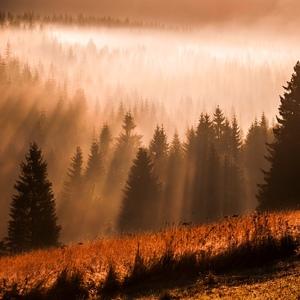 Za závojom hmly