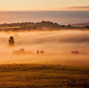 Magické ráno v Lesnej III