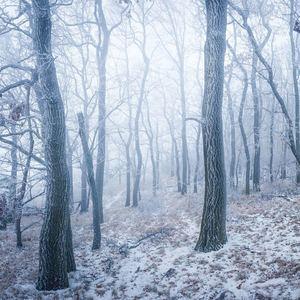 Ľadový les