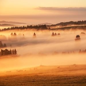 Magické ráno v Lesnej II