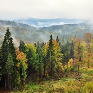 Tajomstvo kysuckého lesa