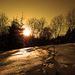 v záplave žltej