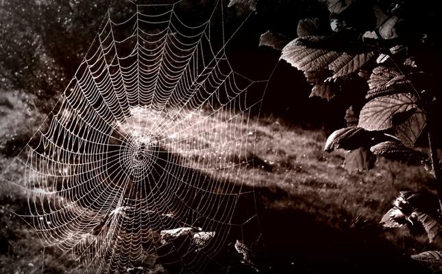 Pavúčí svet