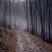 Mystickým lesom