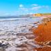 Dorset coast I