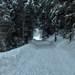 Cesta v tunely stromov