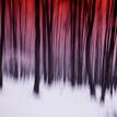 Strážovský les