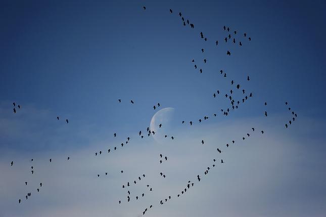 let na mesiac