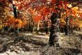 Jesenna paleta