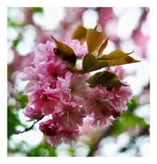 jar v ruzovom