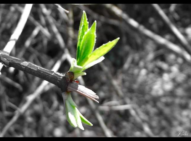 Jarný puk